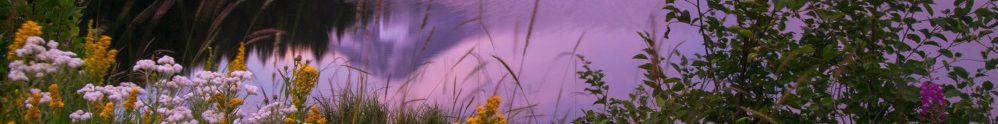 Mount Hood Flowers